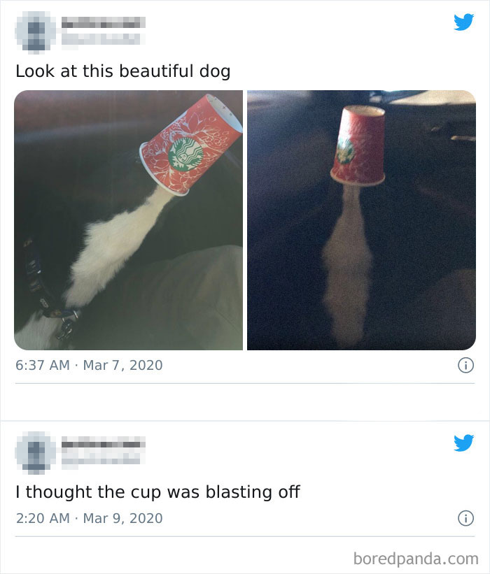 Dog With A Starbucks Cup In Its Snout