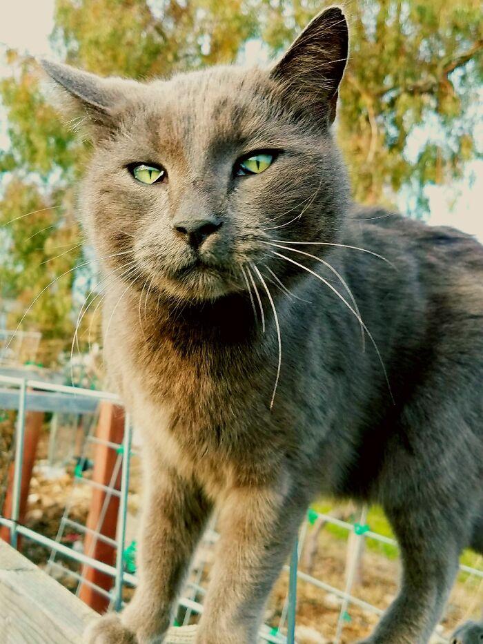 My Sweet Cat, Thunder