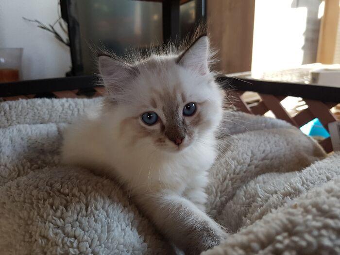 Meet Nero