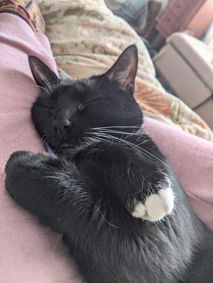 Sleepy Lucy