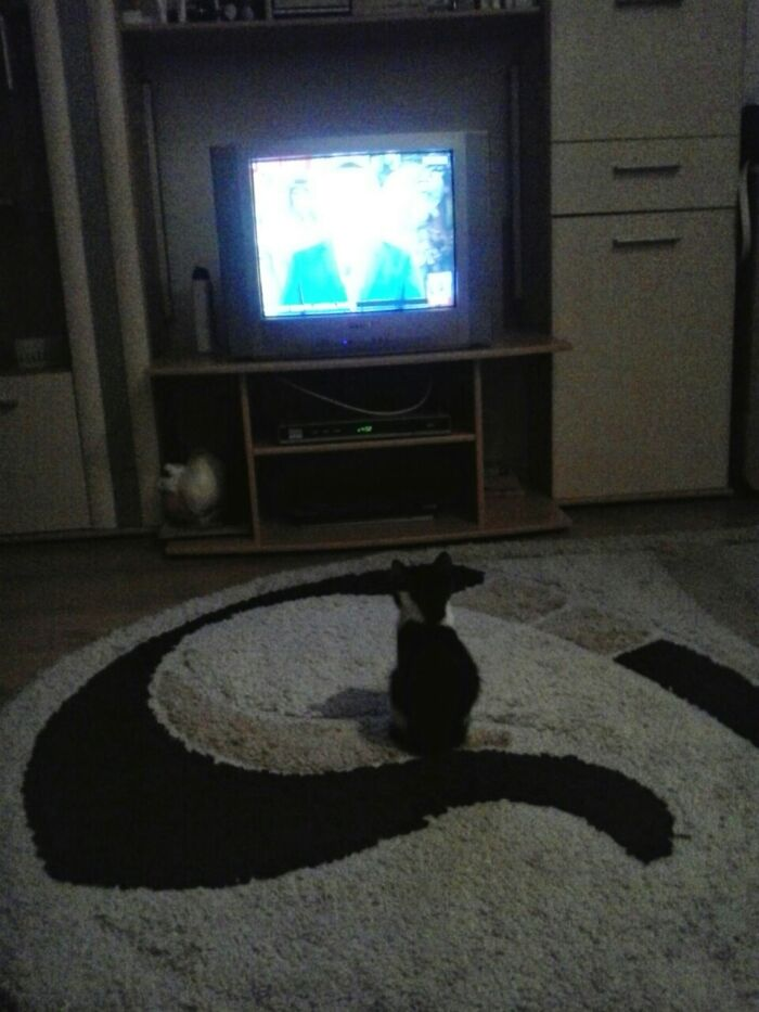 Dixy, Learn To Watch TV... 5 Years Ago...