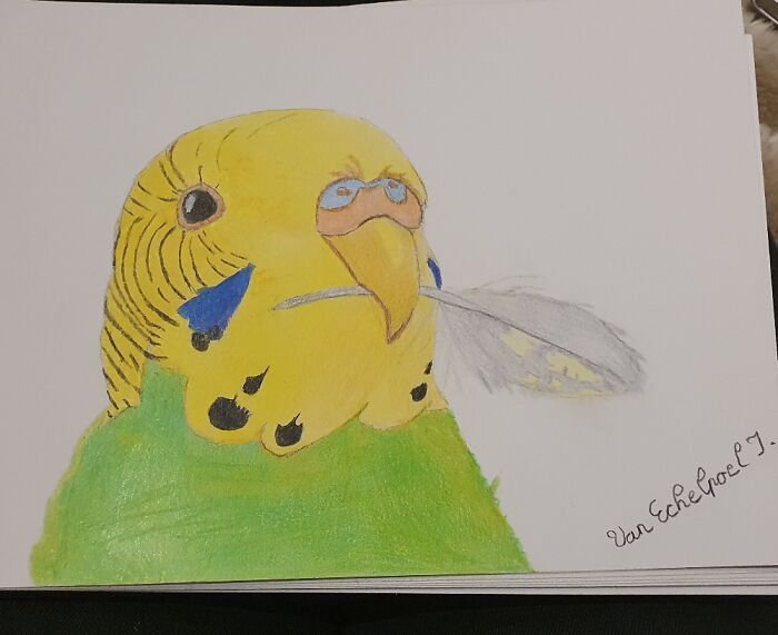 Made A Drawing Of My Budgie Playing With Her Own Feather 