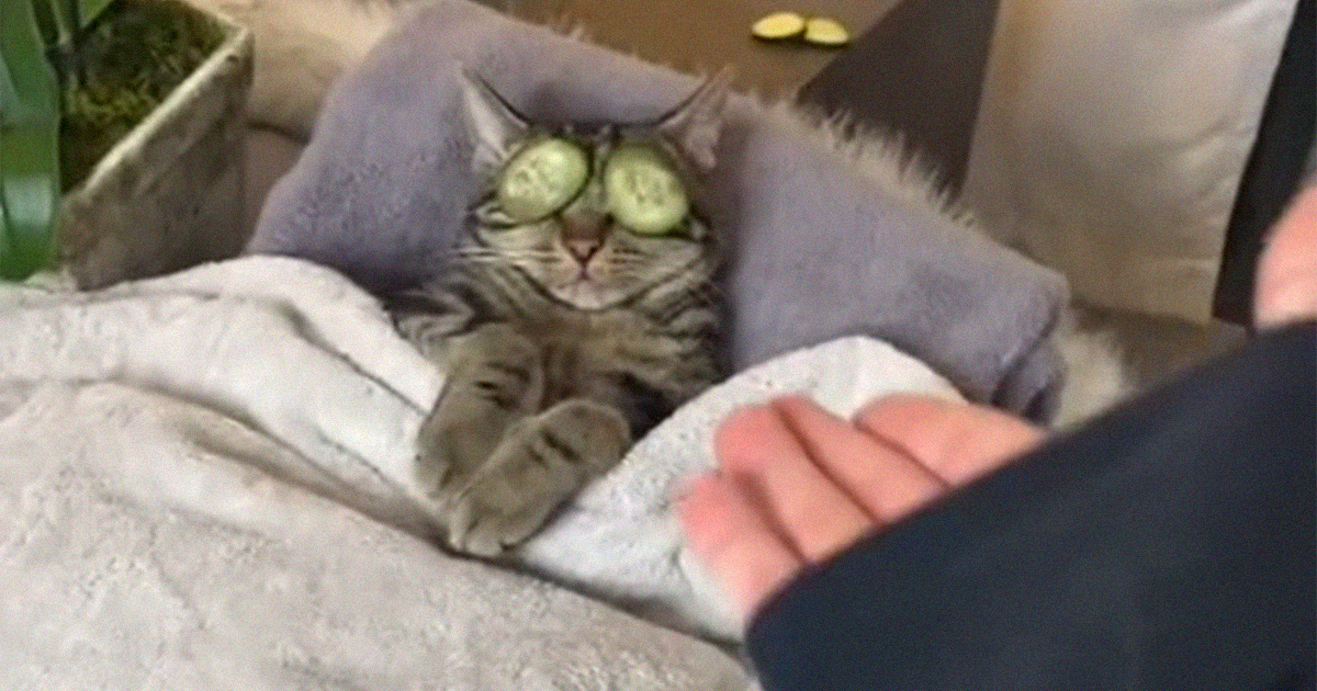 This Cat Spa Day TikTok Video Goes Viral, Is Watched Over 50 Million Times - bored panda