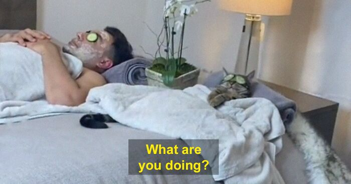 This TikTok Of A Cat Being Pampered In A Home Spa With Owner Goes Viral