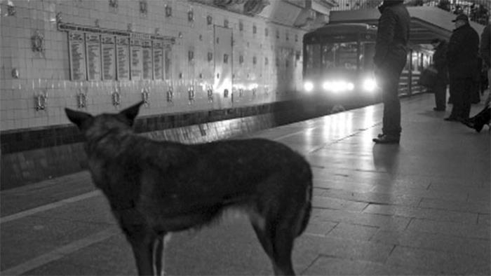 Til That In Moscow, Packs Of Stray Dogs Will Sometimes Send Out A Smaller, Cuter Member To Beg For Food, Apparently Realising It Will Be More Successful Than Its Bigger, Less Attractive Counterparts