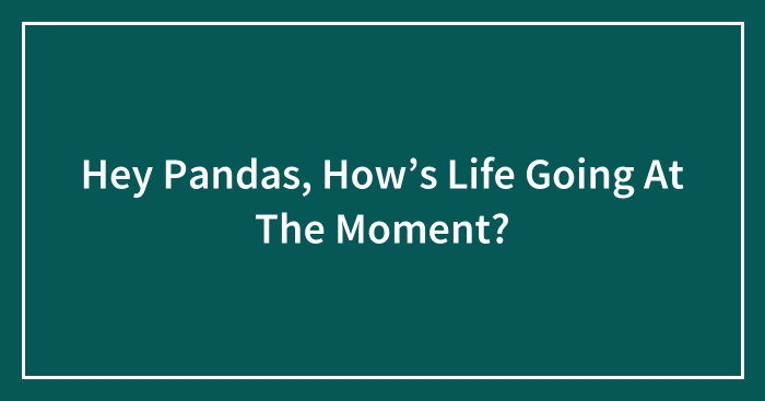 Hey Pandas, How's Life Going At The Moment?
