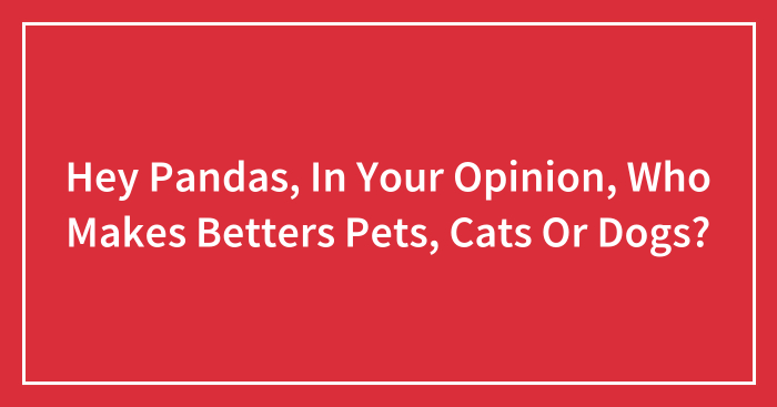 Hey Pandas, In Your Opinion, Who Makes Betters Pets, Cats Or Dogs? (Closed)