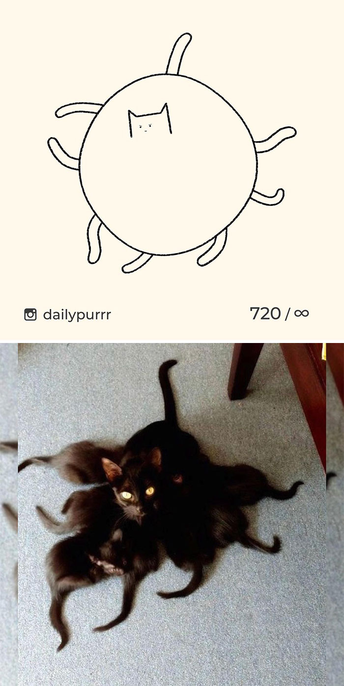 Stupid-Cat-Drawings-New-Dailypurrr