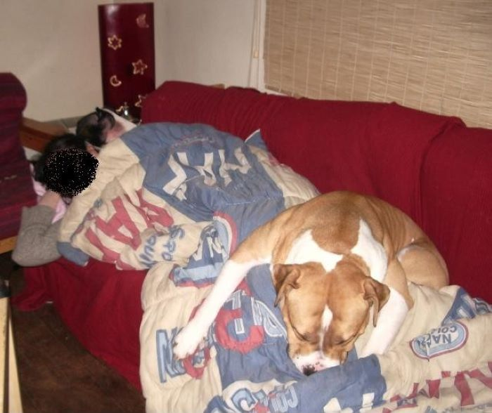 Sleepovers Are Exhausting!(2 Dogs In The Pic, Mine Was The Liquid One)