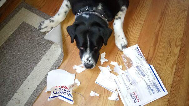 dog-ate-it-60480aa52d558.jpg