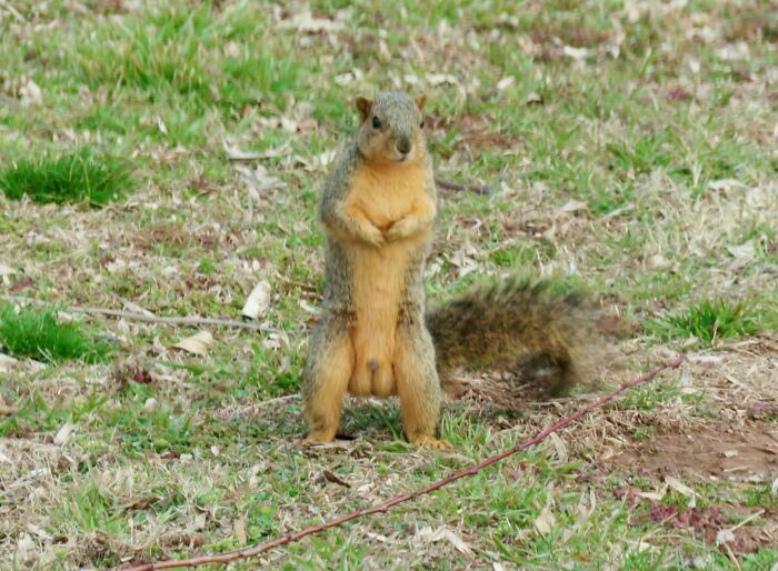 Next Time Starring On Squirrel Porn Is Ballsy The Squirrel