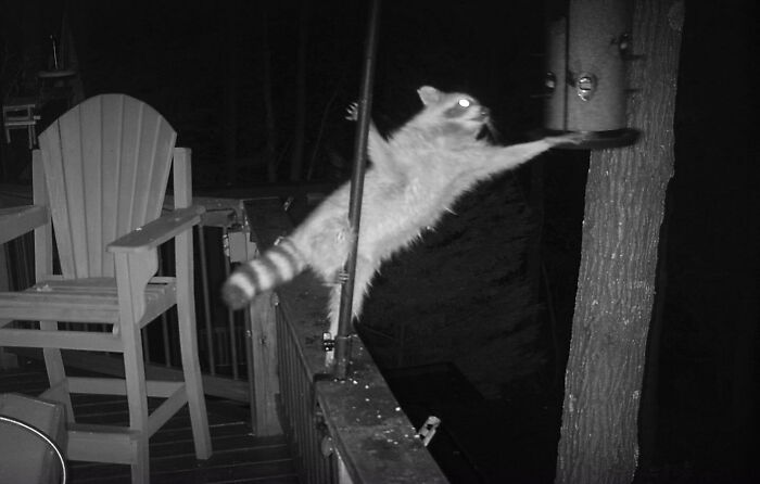 I'm Sure Y'all Can Think Of A Good Caption For This Pole Dancing Raccoon