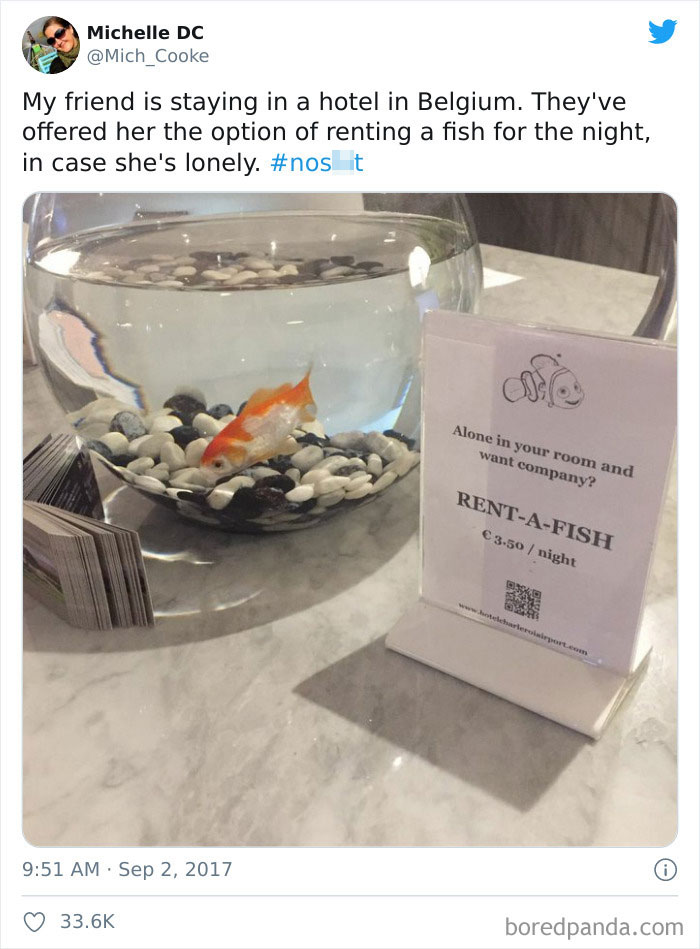Hotel In Europe Offers A Rent A Pet Fish For Single Travelers