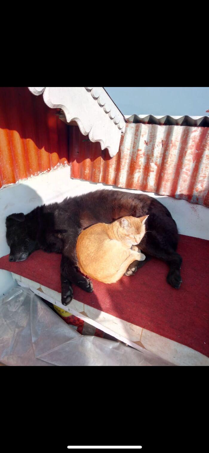 My Late Dog( Killu) And My Cat (Mackey) Best Friends Here's Them Basking In The Winter Sun