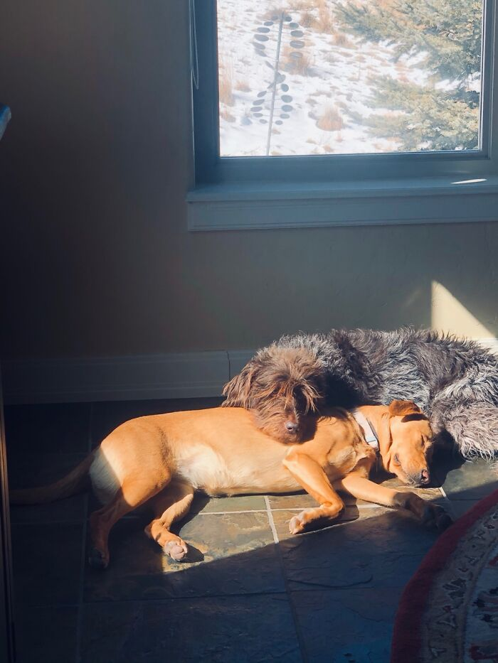 Napping In A Sunbeam