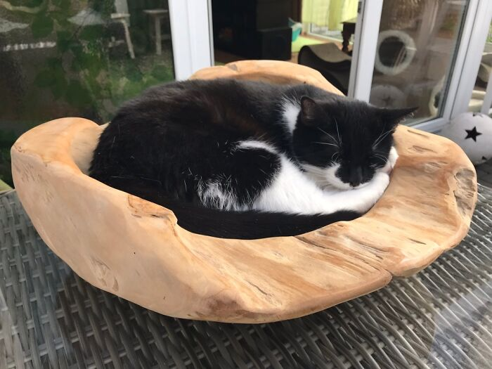 Perfect Fit In My Wooden Bowl