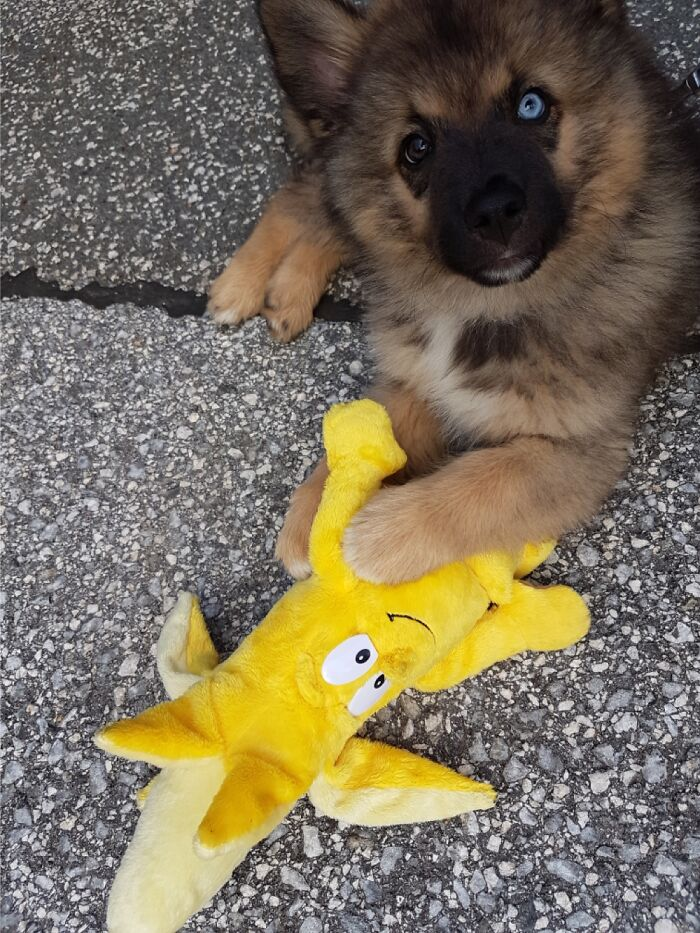 Baby Koda With A Banana For Scale