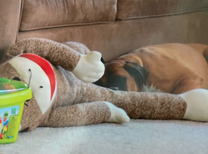 This Is Roxy. Roxy Is Cuddling With Sock Monkey. Roxy Died Last October. :(