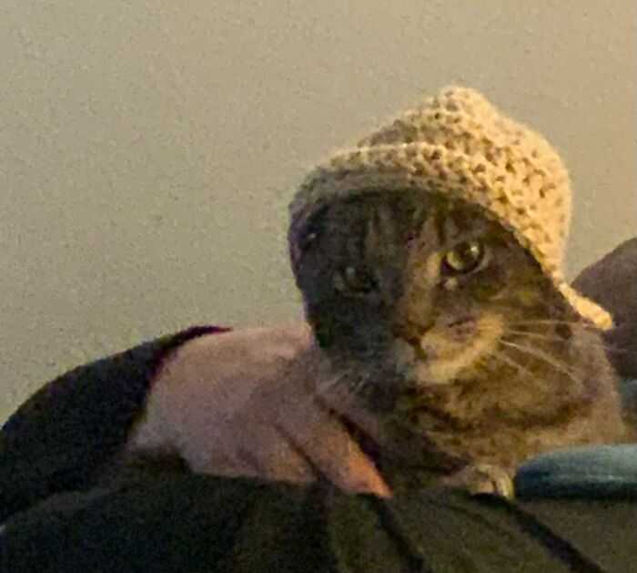 Grandma Made Him A Hat. Not So Happy About It. Lol