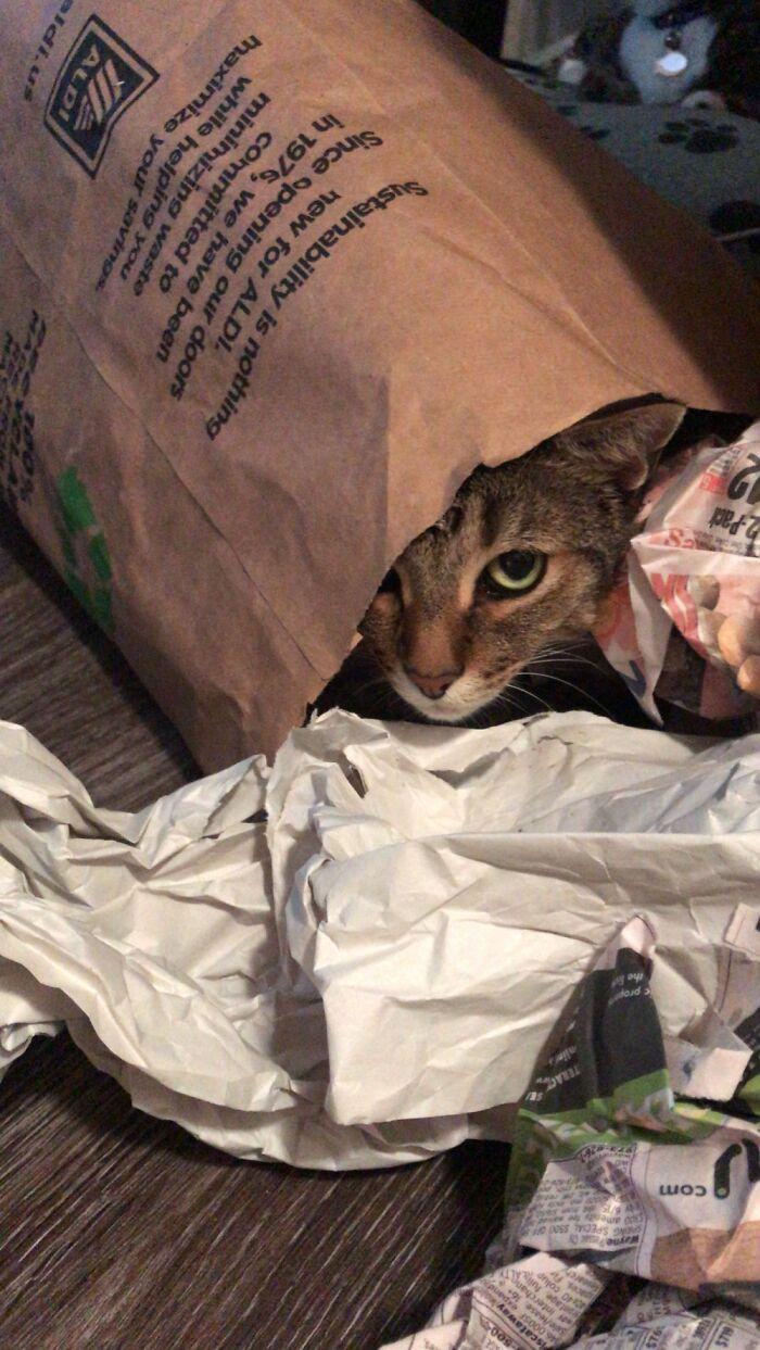 It's My Bag! -Jude
