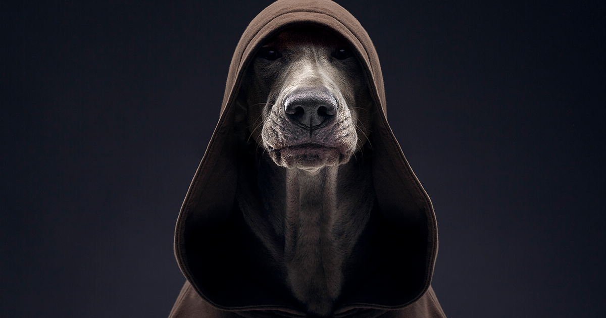 We Explore The Uniqueness Of Different Dog Breeds And Their Beautiful Personalities (41 New Pics)