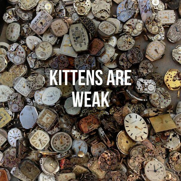 kittens-are-weak-605272a1b8921.jpg