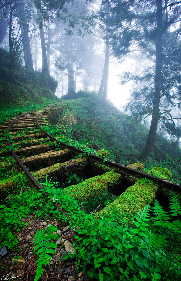 Railroad Tracks In The Forest (Taiwan)