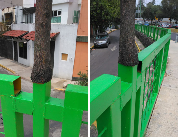 A Tree Somehow Growing In A Mexico City's Pedestrian Bridge