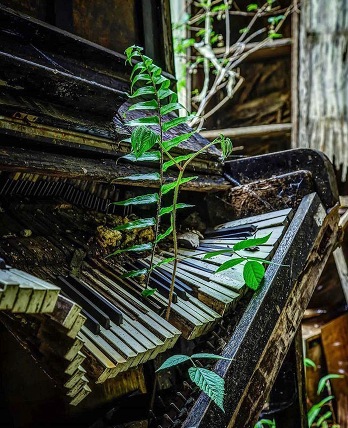 A Piano Left To Nature