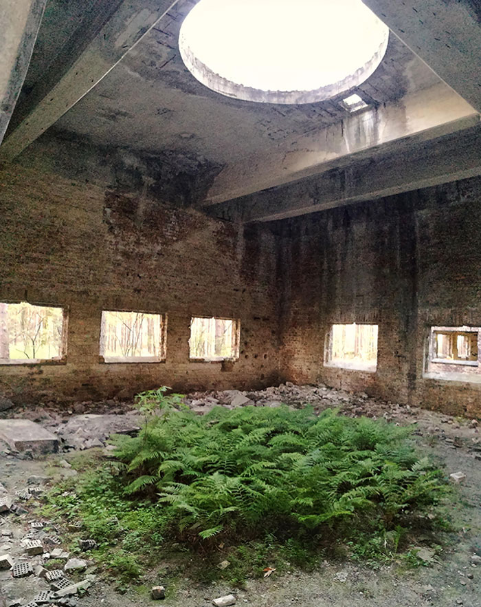 Fern Growing Under A Circular Roof Hole