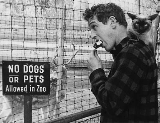 paul-newman-cat-zoo-604d083c91e8a.jpg