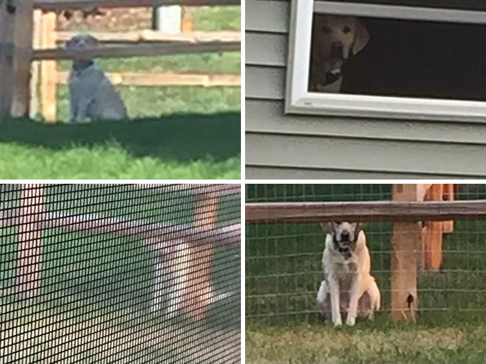 Few Pictures Of My Neighbor's Dog Stalking Me