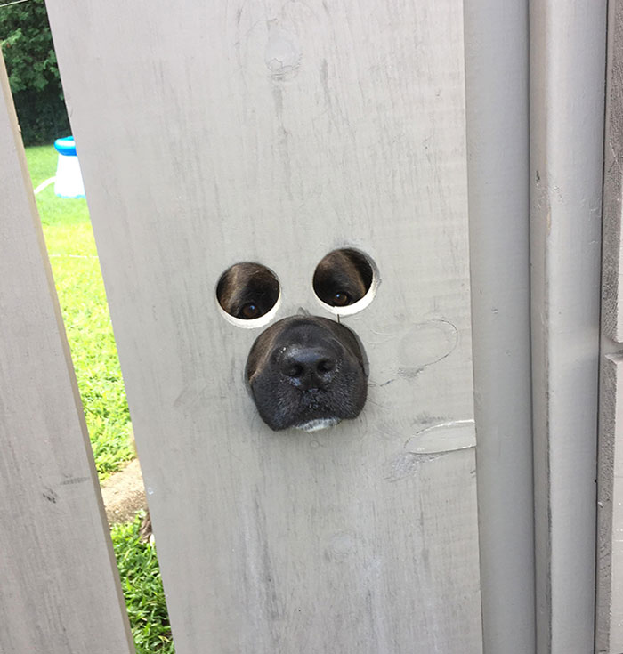 My Neighbor Cut Holes In His Gate So His Dog Could See Out