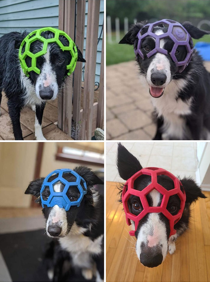 She Chewed Up Her Red Holee Roller Ball And Now Our Mask Collection Is Complete. We Finally Got One In Every Color