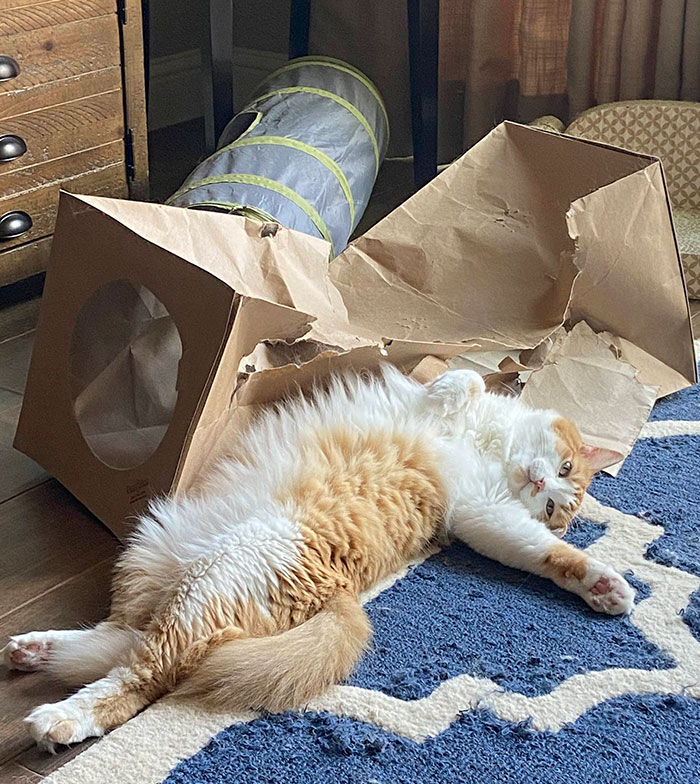 Accidental Renaissance, Cat Edition: Destruction Of The Cardboard Tunnel