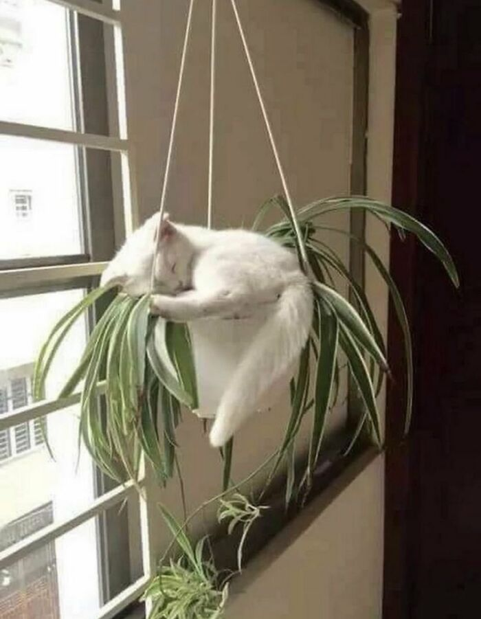 Places-Where-Cats-Shouldnt-Be