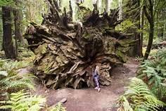root-605ff2be7eeaf.jpg