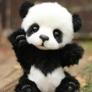 Panda Gurl