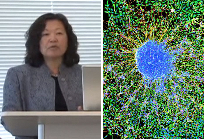 Ann Tsukamoto Was One Of The Inventors Of Stem Cell Isolation