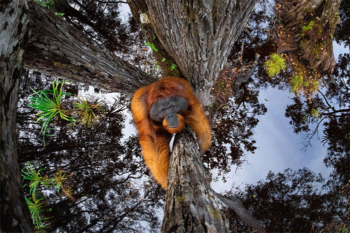 30 Amazing Winners Of The 2020 World Nature Photography Awards