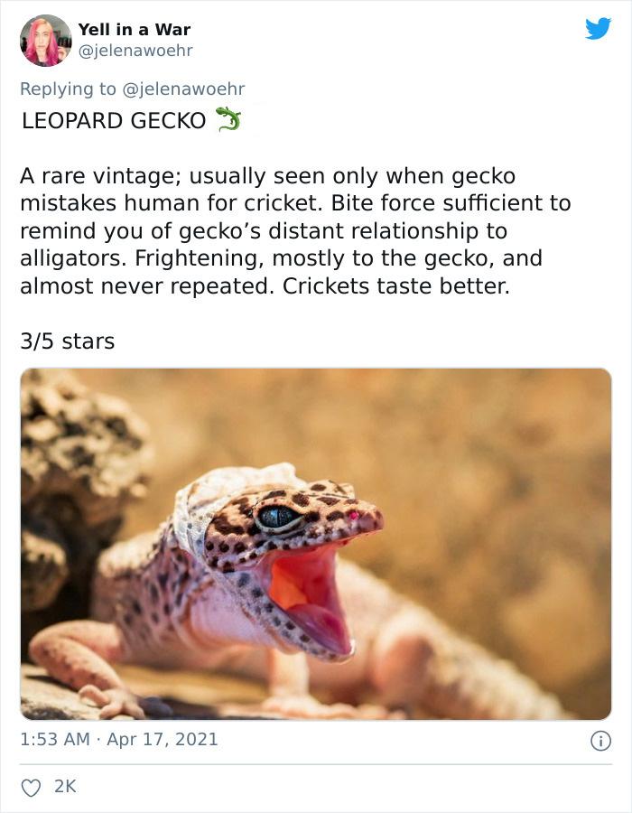 Animal-Bites-Being-Bitten-Review-Ranking-Twitter