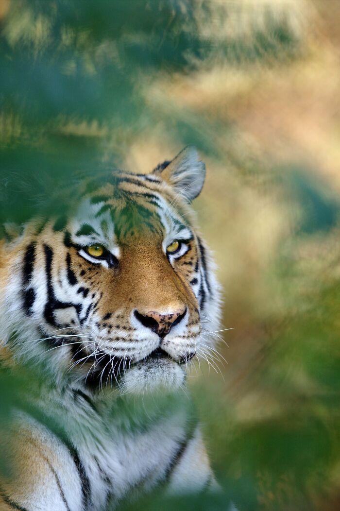 Wildlife-Photography-Animals-Best-Photos-Goran-Anastasovski