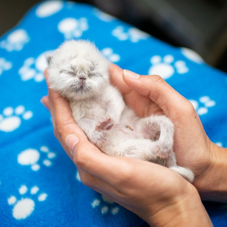 Meet Grandpa, The Newborn Kitten Who Took Over The Internet With His Unusual Looks And Charm