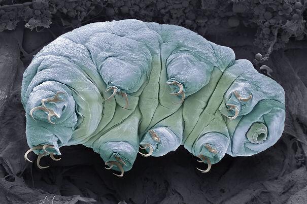 191010-tardigrade-water-bear-ew-457p_f758b7c7434ff1b0db520bb69d66e912.jpg