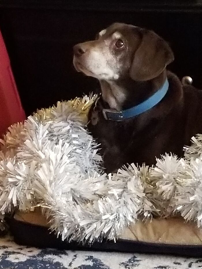 """Our Boy Tucker.....we Adopted Him Form The """"Bruised & Reduced Rack"""" At The County Shelter As He Had Been Returned Twice. We Had Over 12 Wonderful Years Together. He Passed Away Two Years Ago. Miss Him Still. Rs Toghere"""
