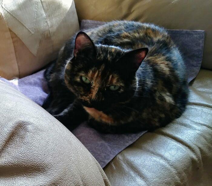 My 8y/O Rescue Tortie, Lola