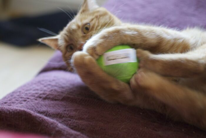 Owners-Share-Stupidest-Things-Their-Pets-Do