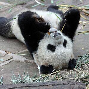 Happy_Pandalover