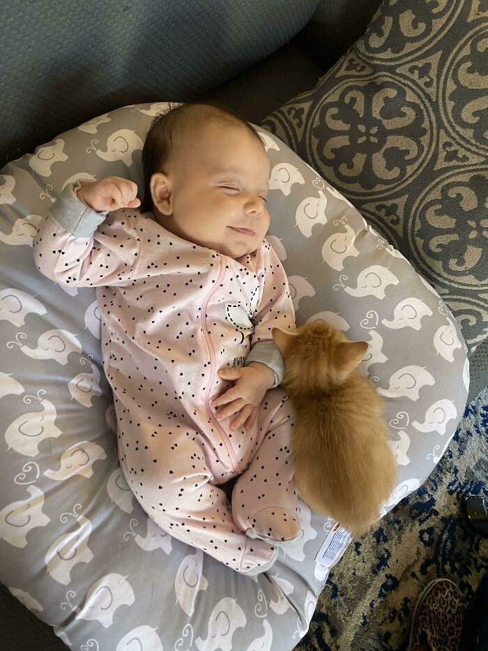 Our Cat Had Kittens Two Days After We Had Our Baby Girl. This Kitten Climbs Into Her Lounger Whenever He Has The Chance. I Think These Two Were Destined To Be Best Buds