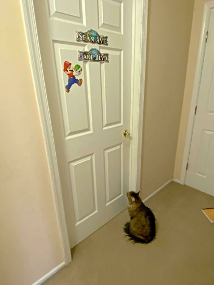 Every Morning, Our Cat Patiently Waits At My Sons' Bedroom Door For Them To Wake Up. And It's Not To Be Fed - He Just Can't Wait To See Them